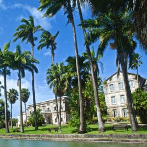 Unsplash - Palm Trees