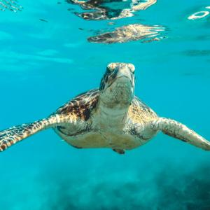 Unsplash - Sea Turtle